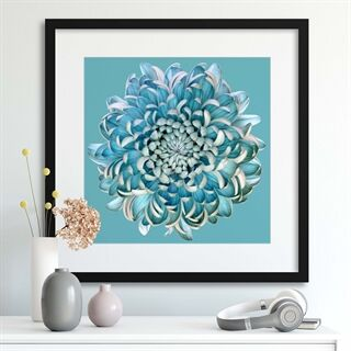 Blue Chrysanth by Brian Haslam - Indrammet plakat