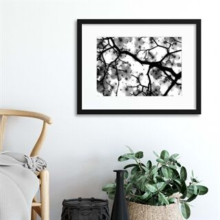 Dogwood by Sarah Wright - Indrammet plakat